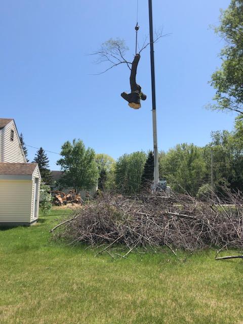 Tree Removal Hampton Falls NH